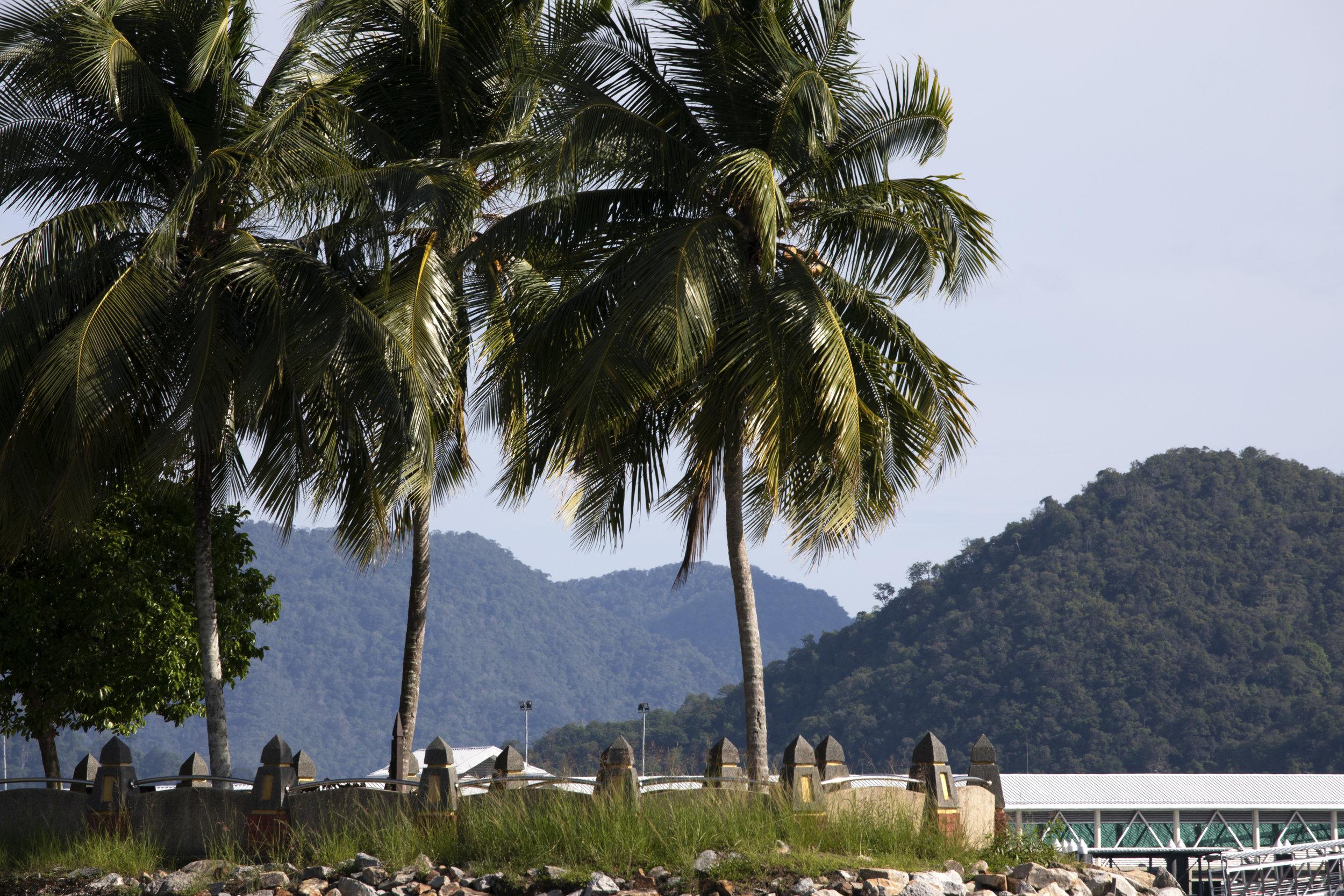 Langkawi Palm Trees, Malaysia 2019