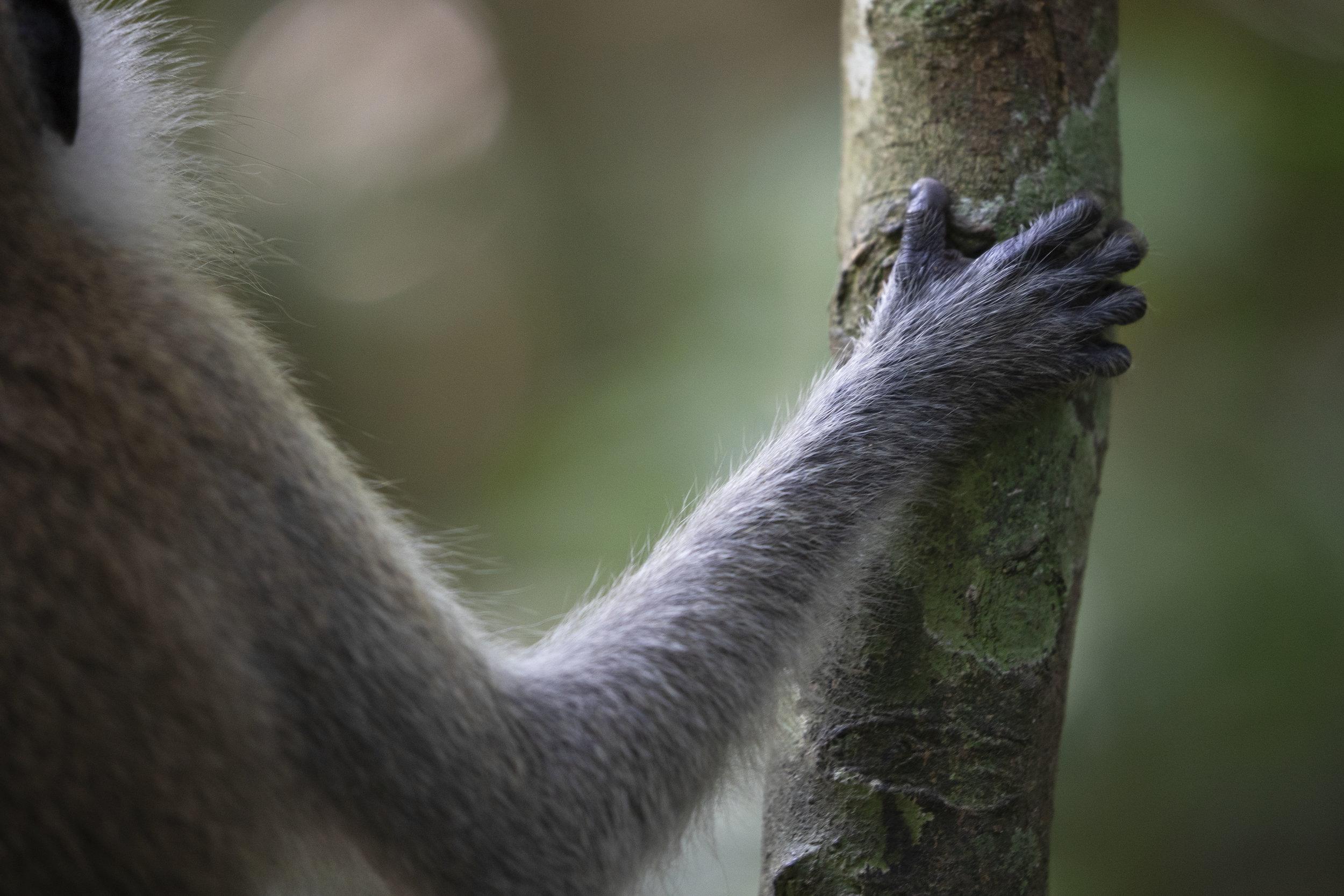Monkey Hand, Malaysia 2019