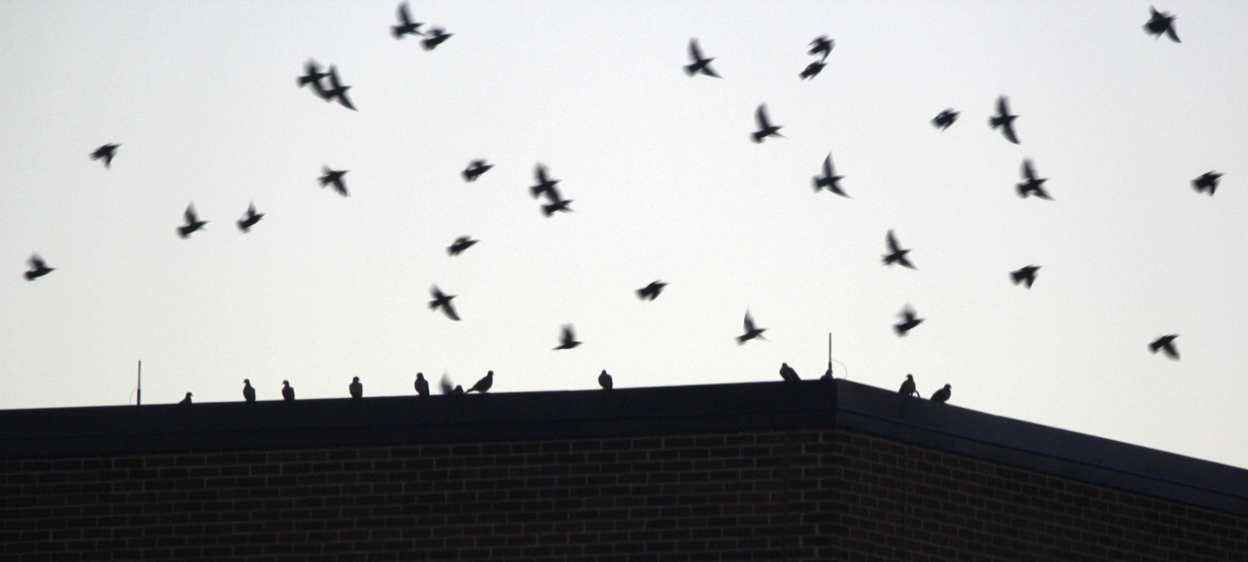 Birds Take Flight, Pittsburgh 2018