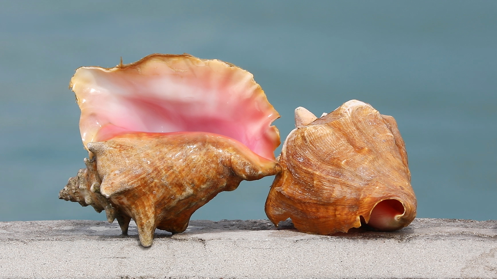 Conch Pic Edited.jpg