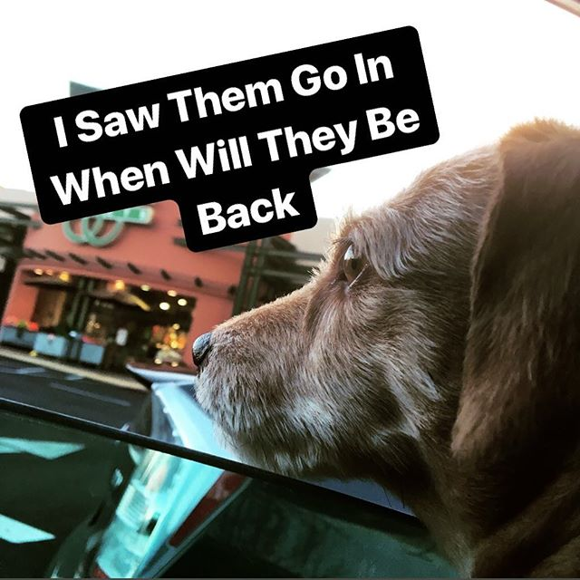 Roxy can't wait for her sister to return #entrepreneur #hustle #smallbusiness #entrepreneurlife #mondaytomonday #businesscoach #podcast #entrepreneurship #documentthejourney #crushingit #digitalmarketing #smallbusinessowner #culture #smallbusinesslove #instagramer #instalife #shopping #outandabout #satisfactionist #satisfactionism