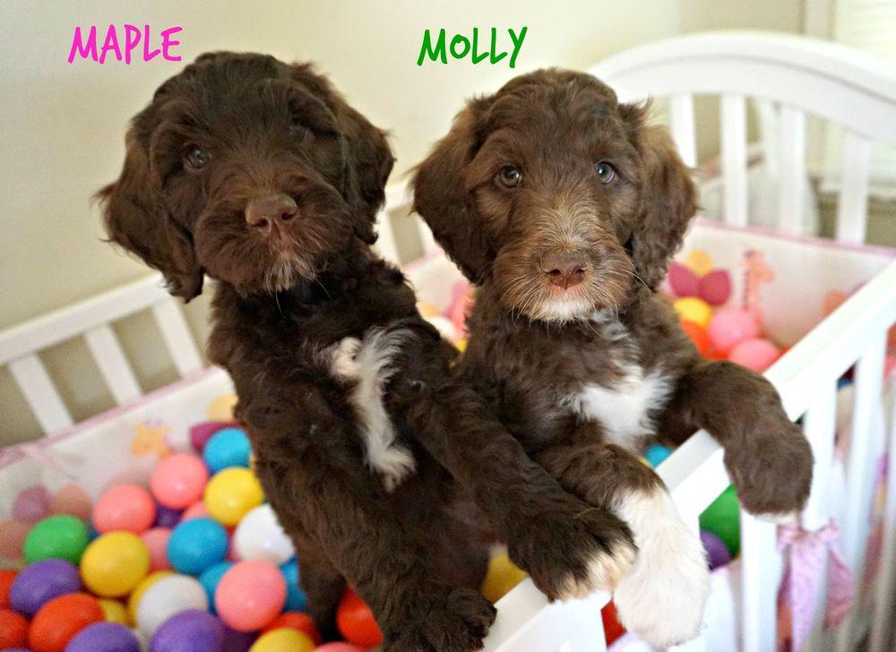 MollyMaple.jpg