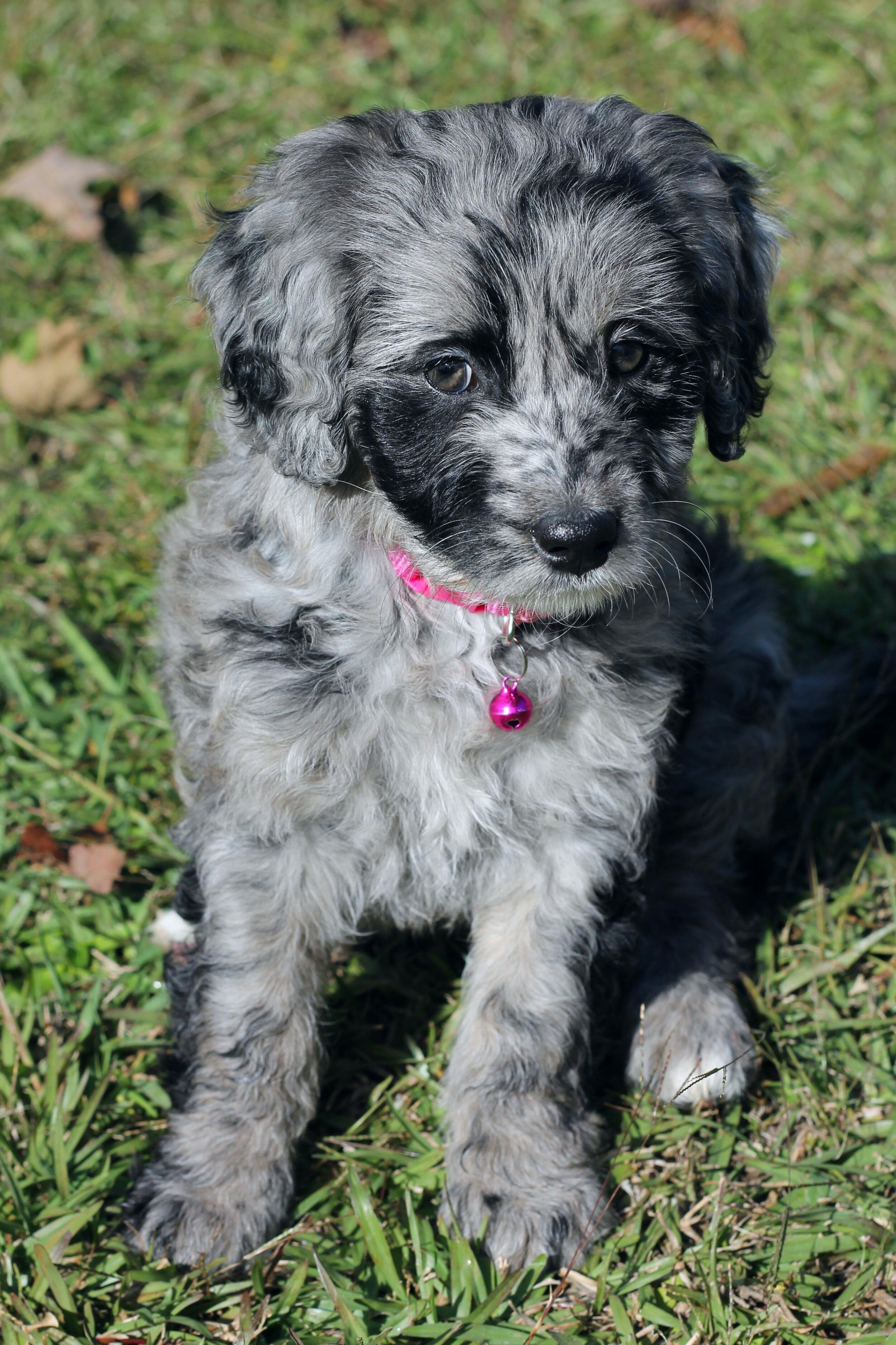 Moms Steel City Puppies