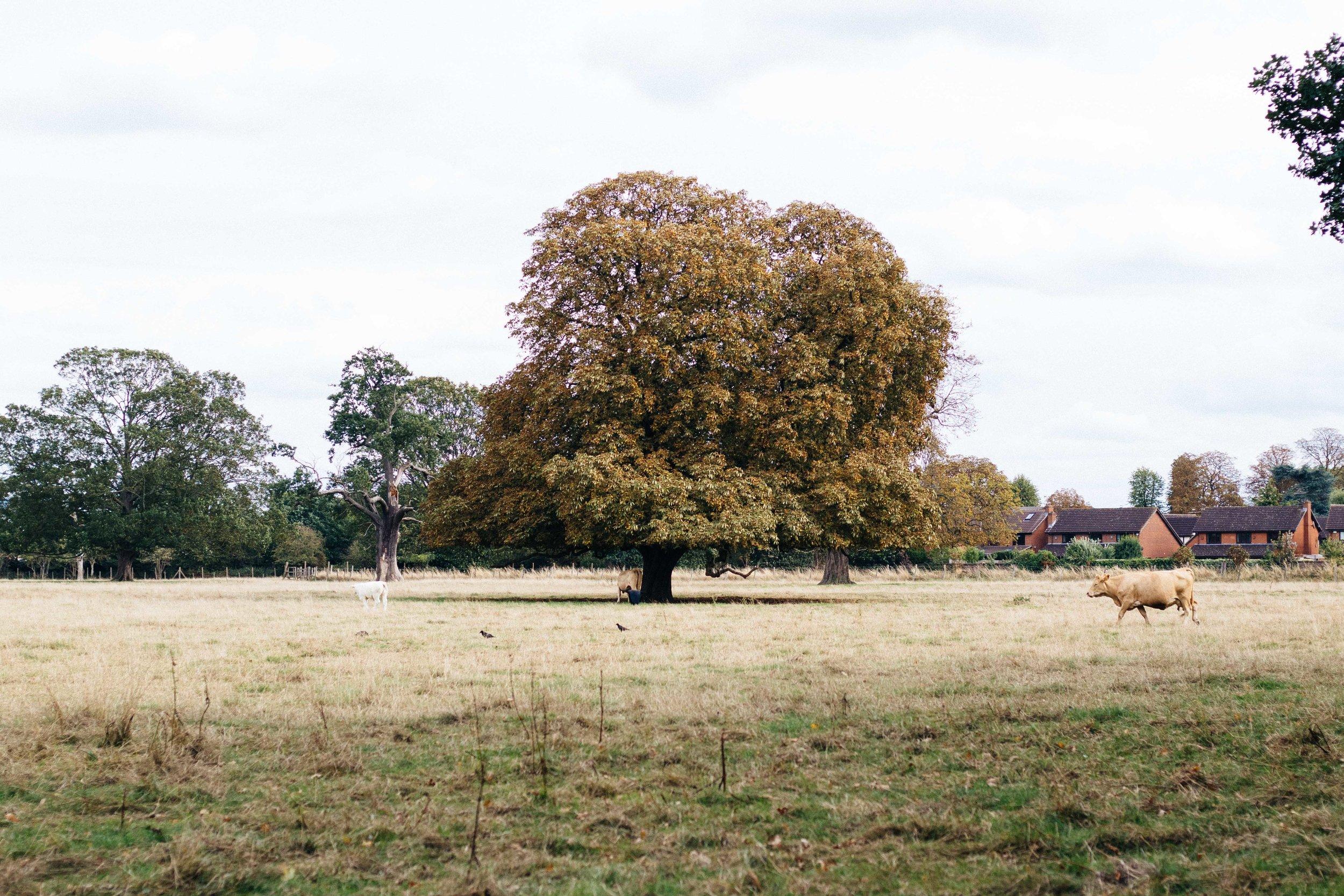 Osterley Park-5.jpg