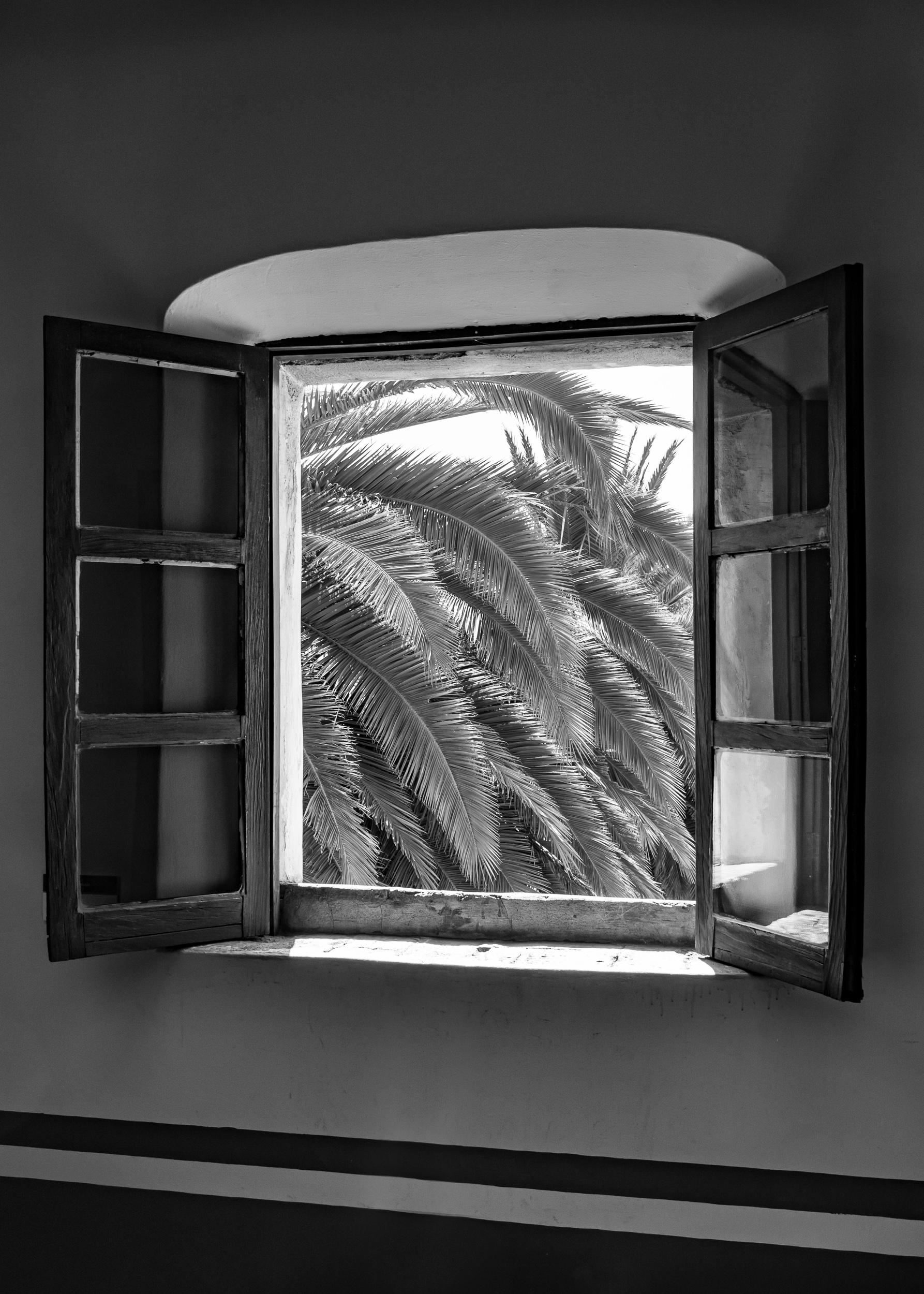 palms31.jpg