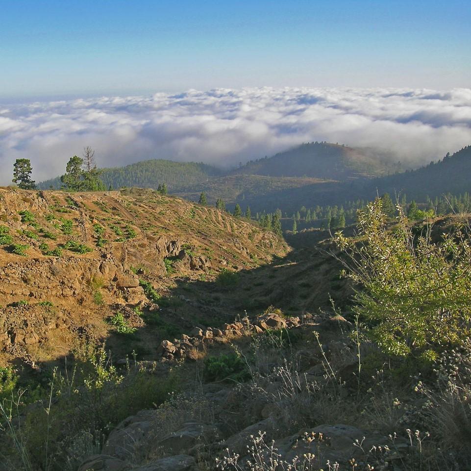 Bodega Frontos, Tenerife, Spain