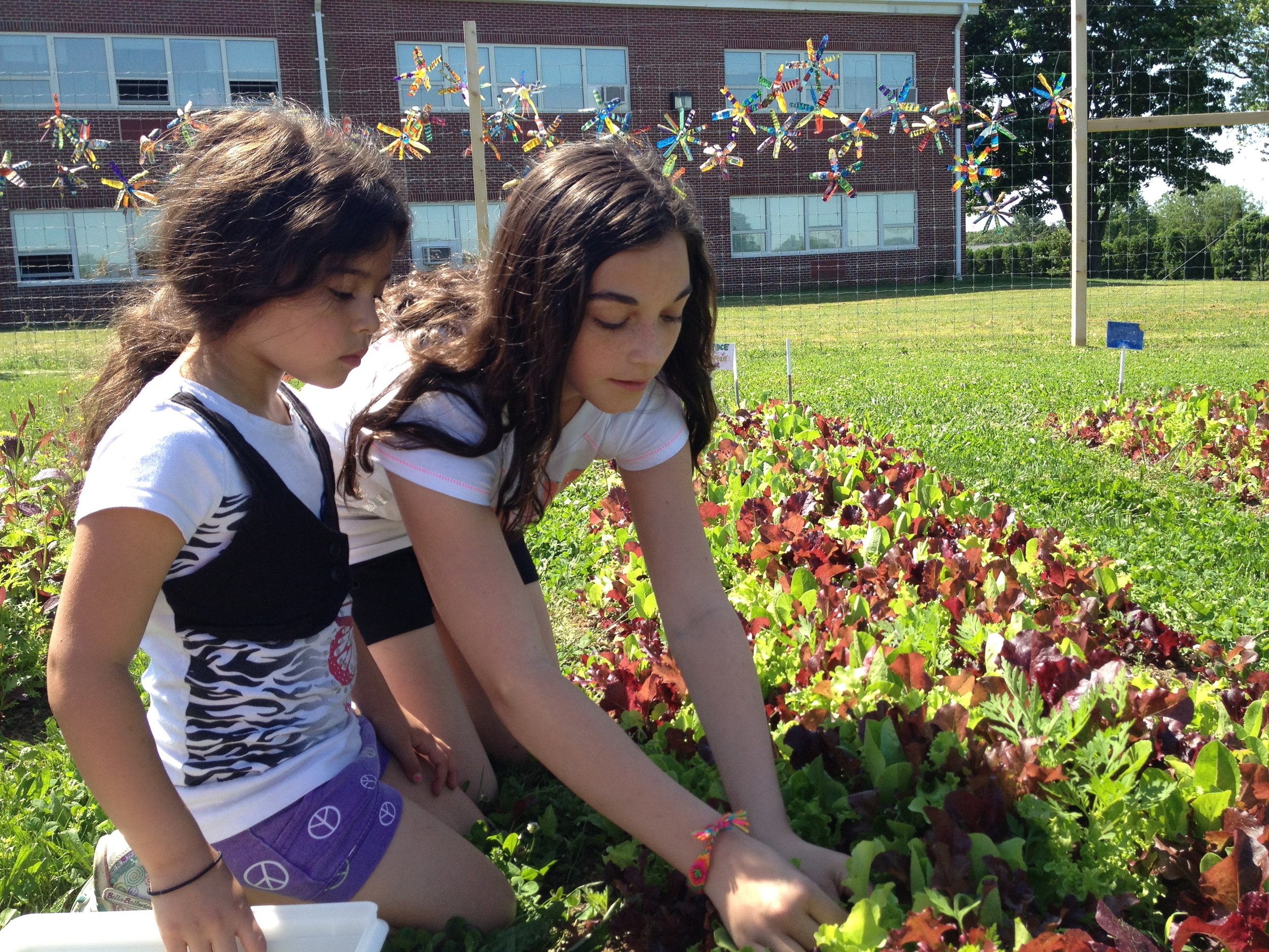 Students work in the School Garden. A community inspired initiative.