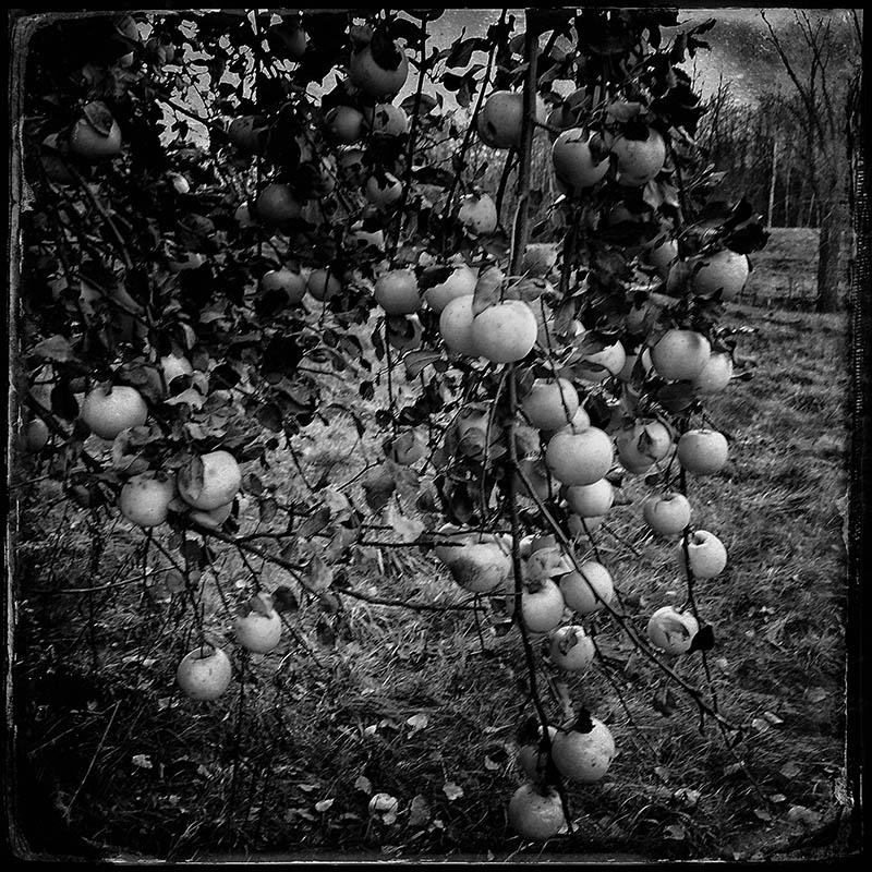 apples3.jpg