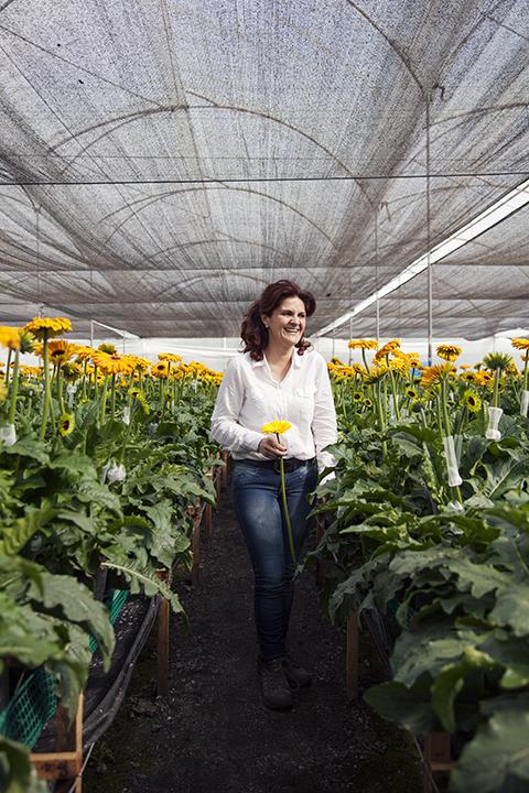 Elite Flowers, Facatativa Columbia