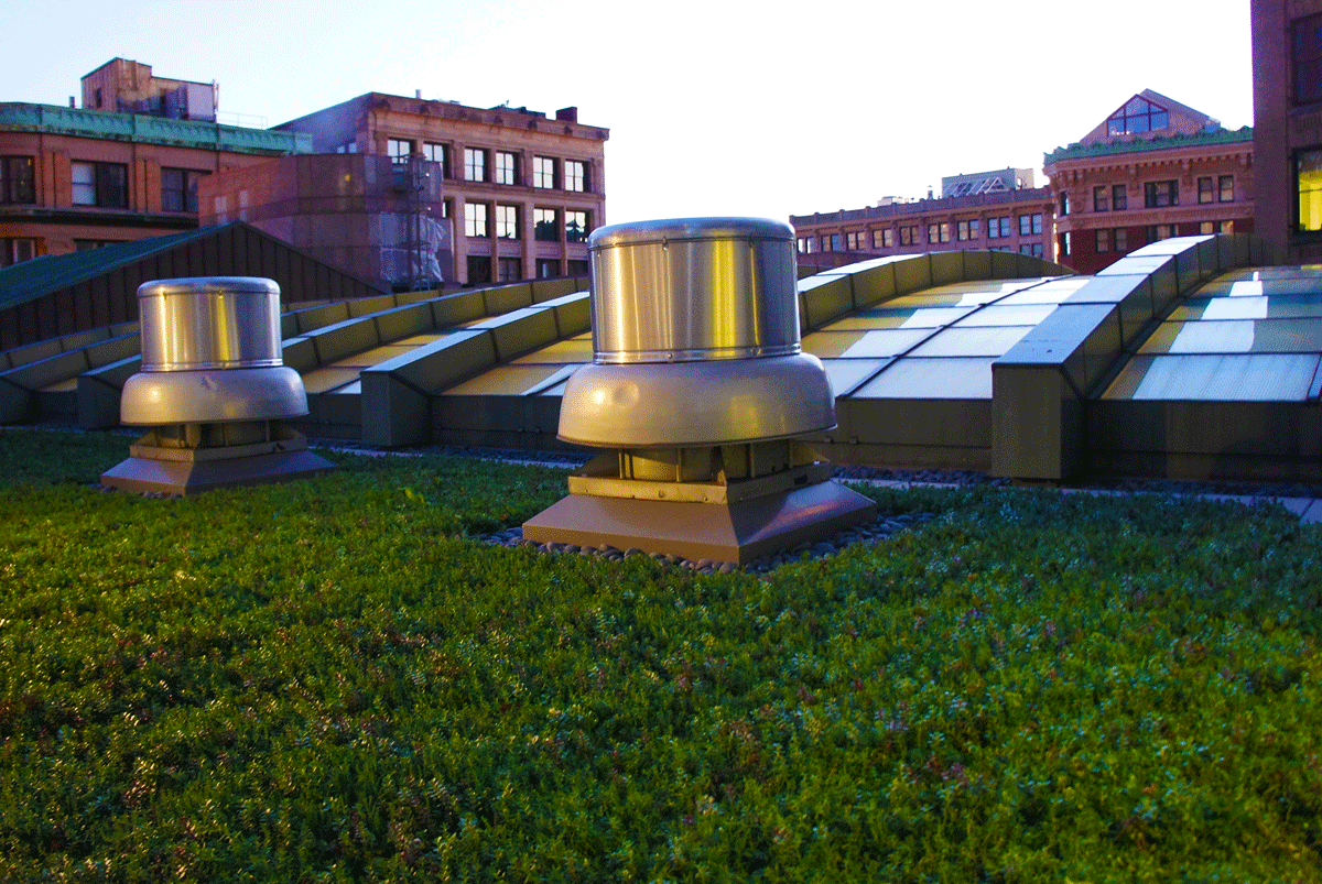 State_Street_Boston_greenroof.png