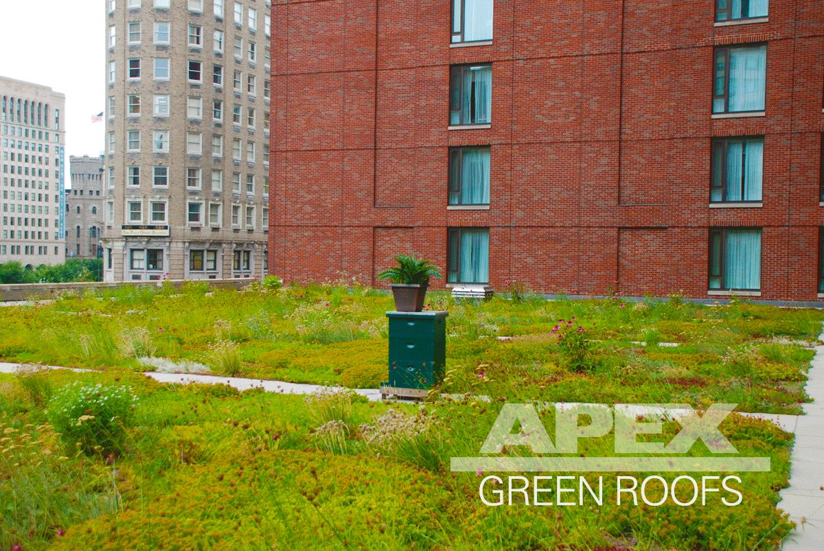 Vegetated roof at the Four Seasons in Boston MA