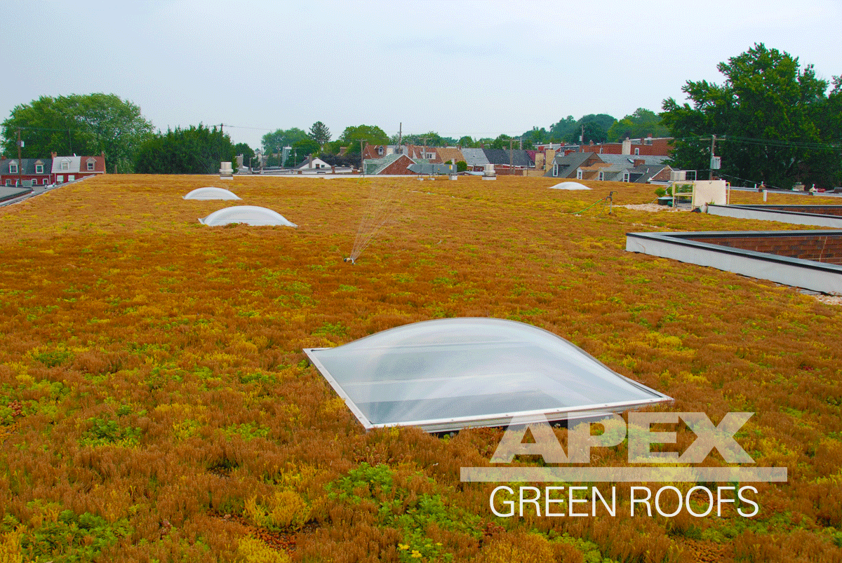 National Novelty Brush green roof installed by Apex Green Roofs, Inc.