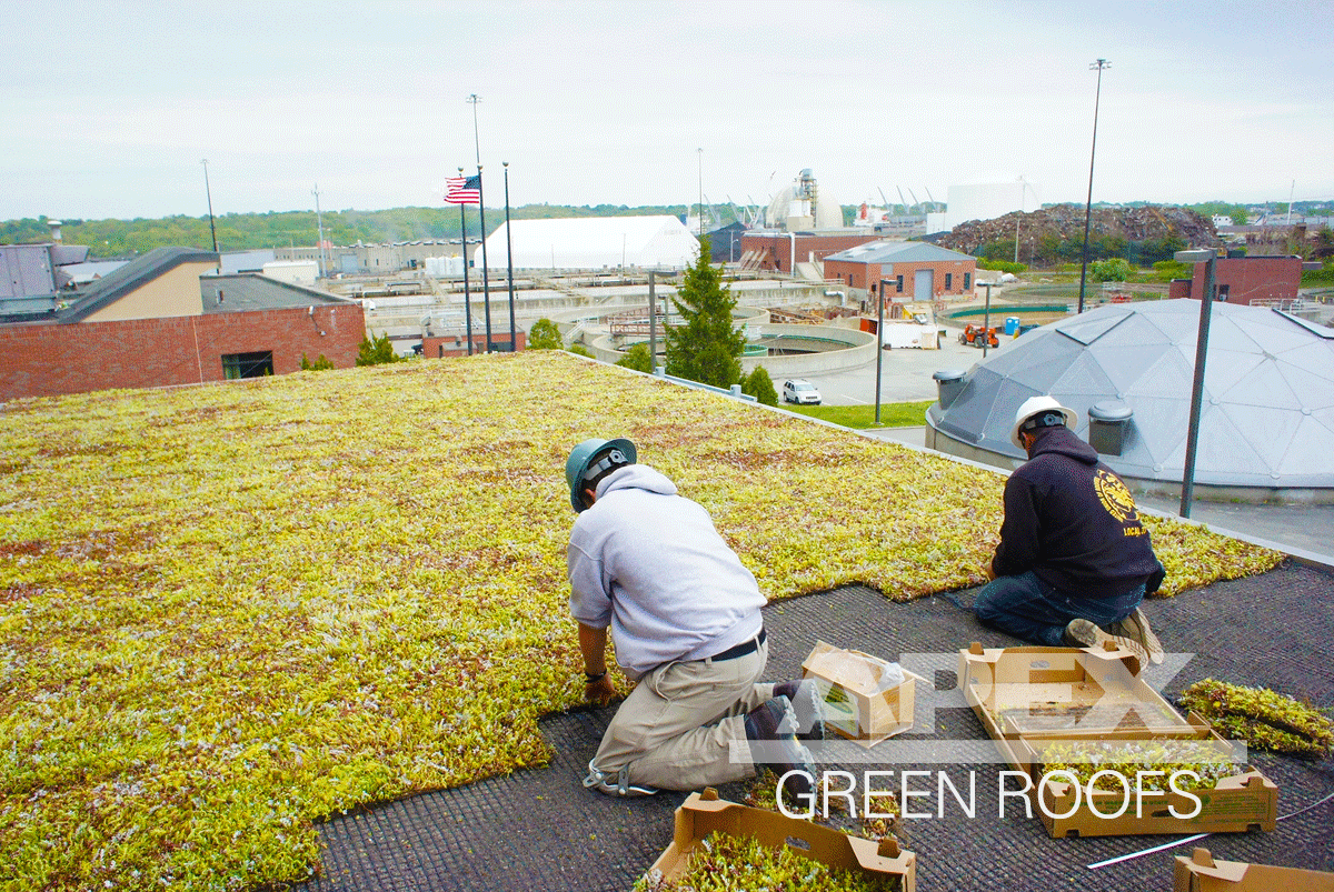 Green Roof at Field's Point WAter Treatment Facility Providence RI