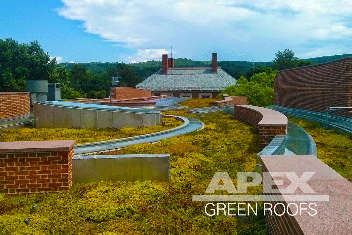 Koch Center at Deerfield Academy green roof, Deerfield m.A.