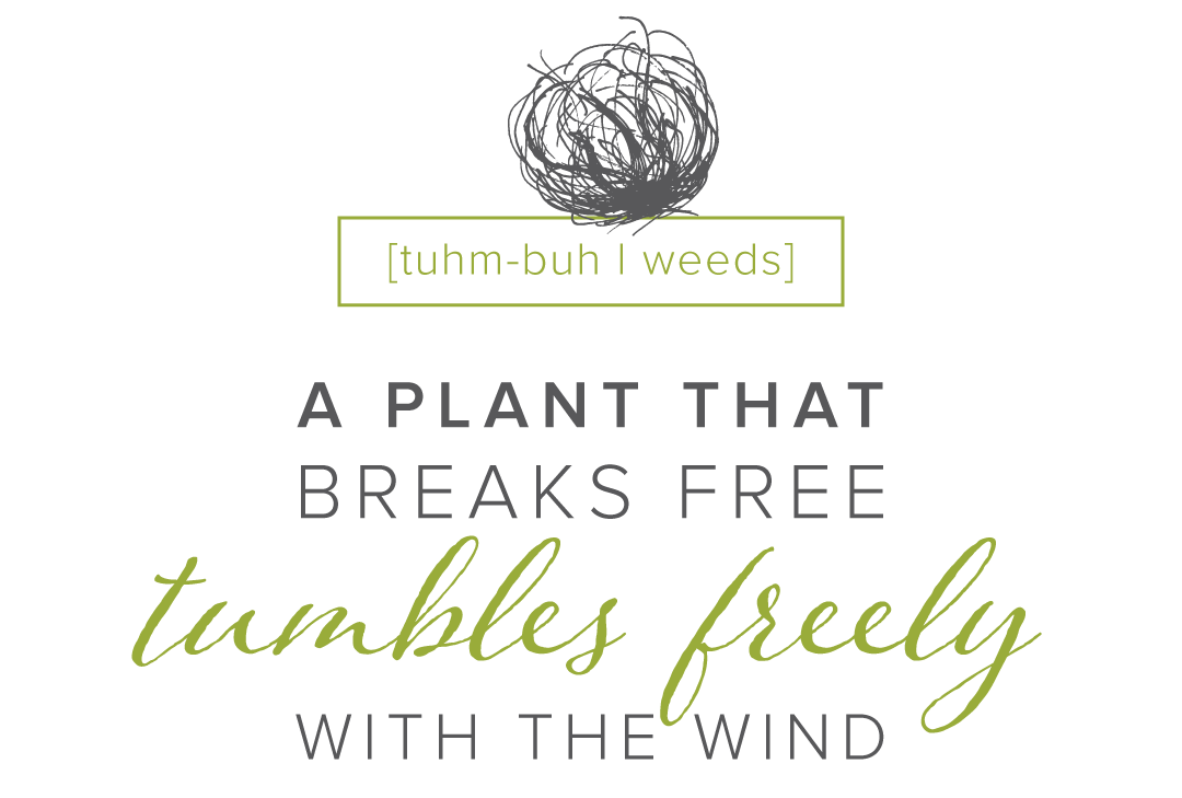 Tumbleweeds Definition