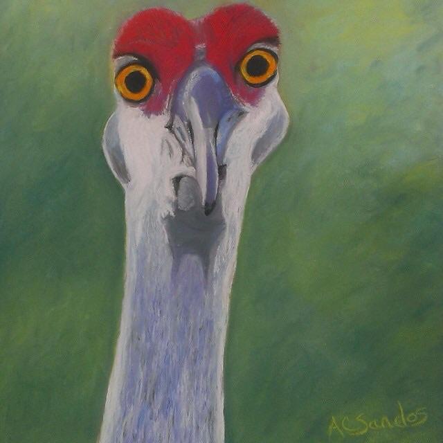 Curious Crane