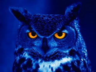 Foto og oplæg til Mad owl. Kilde: ukendt.