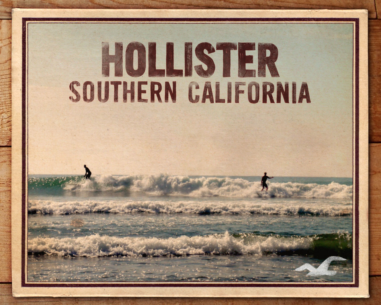 D / BARBATO - Hollister Co