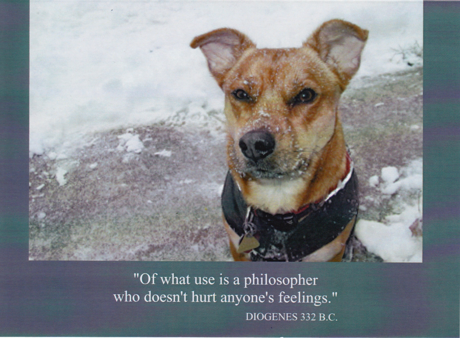 "7    ""Of what use is a philosopher who doesn't hurt anyone's feelings.""    (Inside) Blank card"