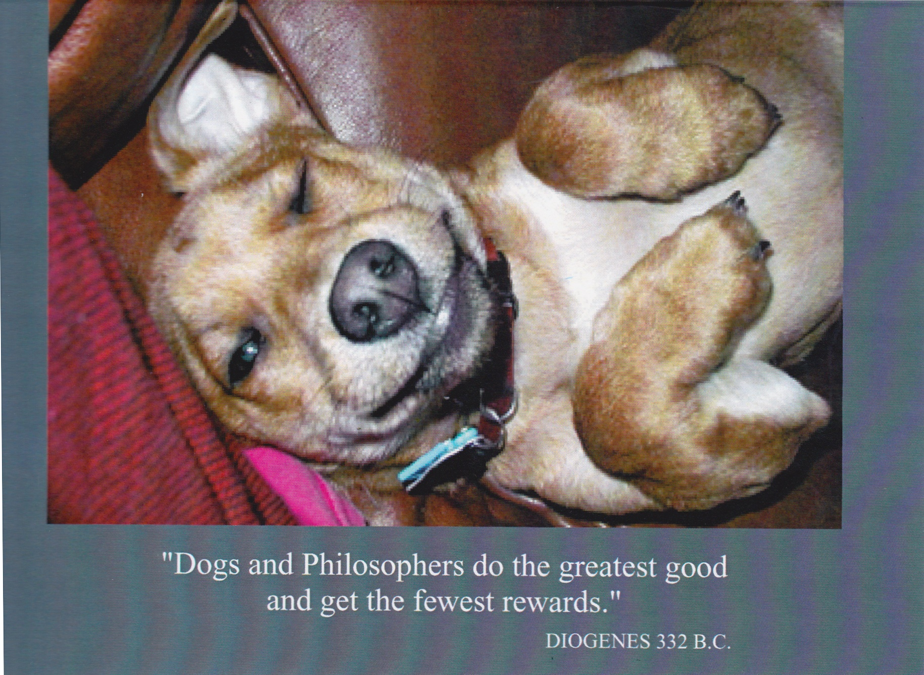 "5    ""Dogs and Philosophers do the greatest good and get the fewest rewards.""    (Inside) Blank card"
