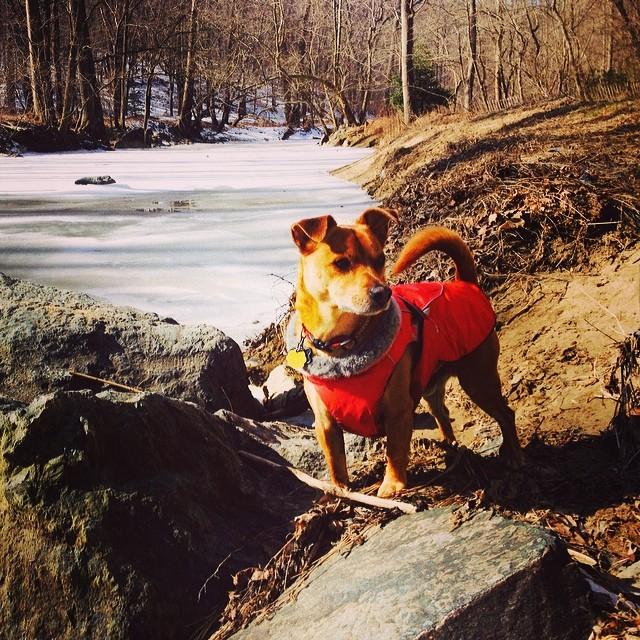 Zen in rock creek park #nps #rockcreekpark #philosopherdog #philosophy #rescuedogs #rescueanimals #hikers #dogsinnature