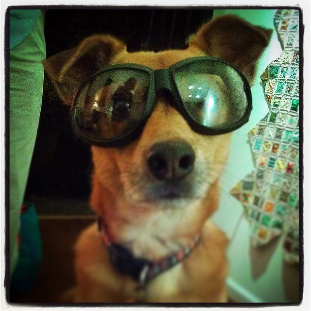 Ready for #halloween! #sunglasses #rescuedogs #cute #philosopherdog