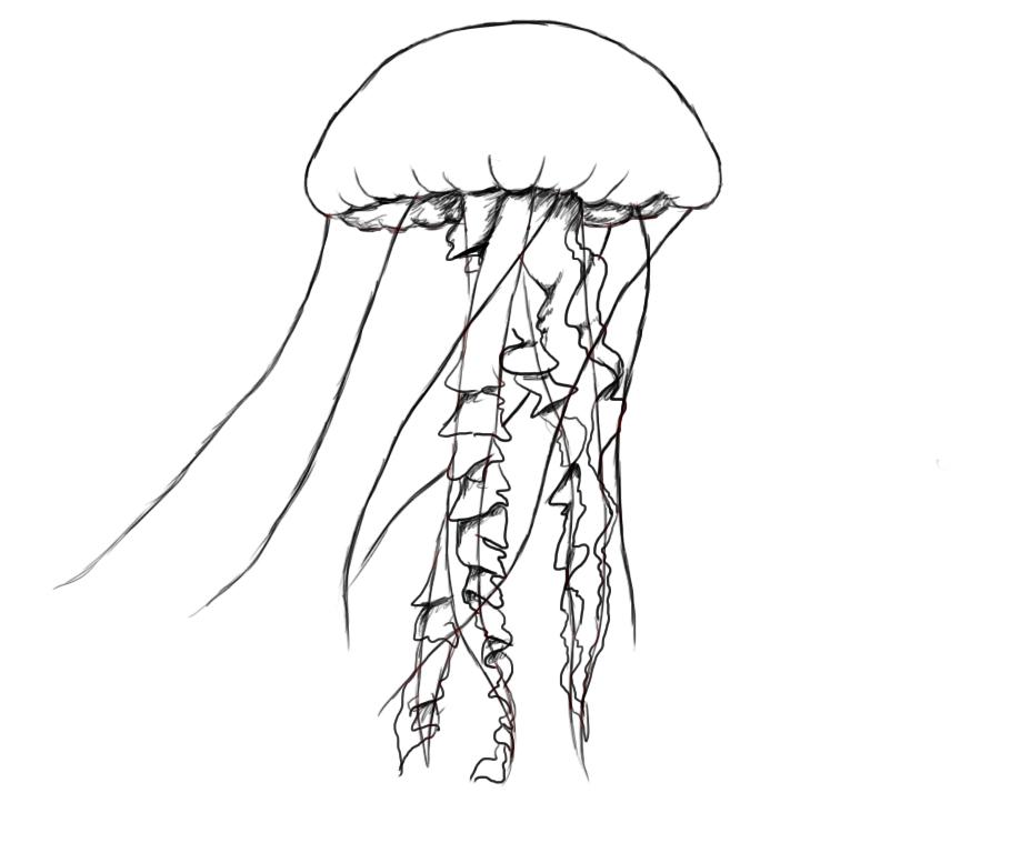 jellyfishboaat.jpg