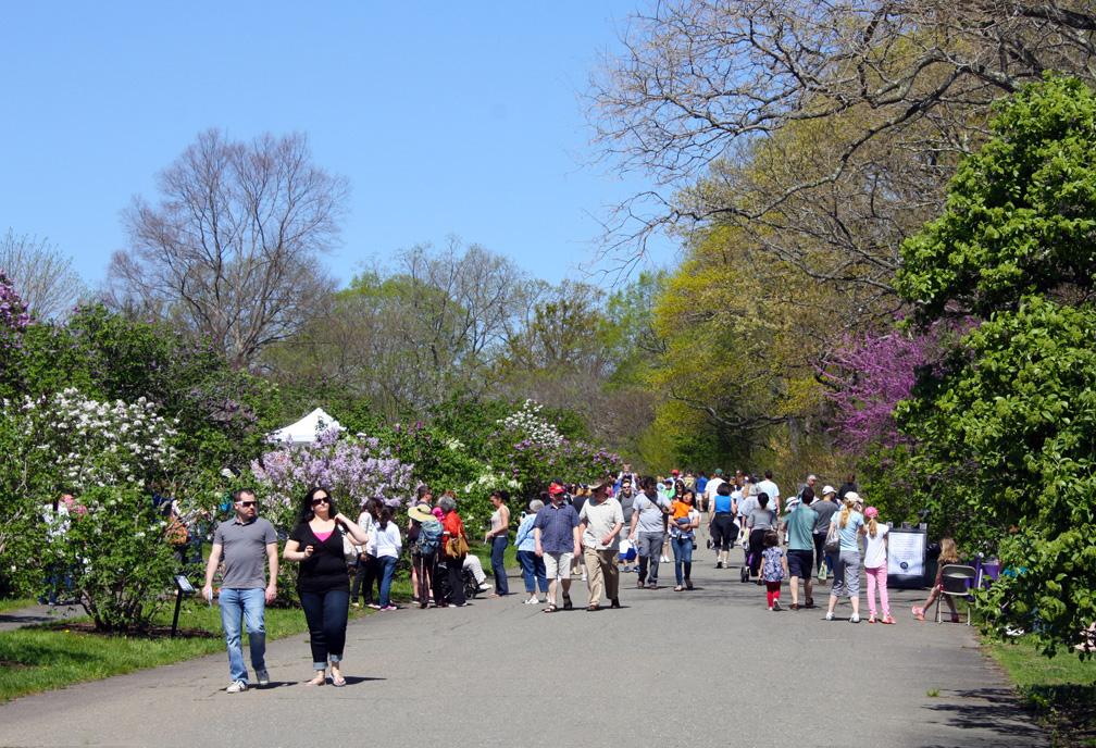 Photo Credit: Arnold Arboretum of Harvard University