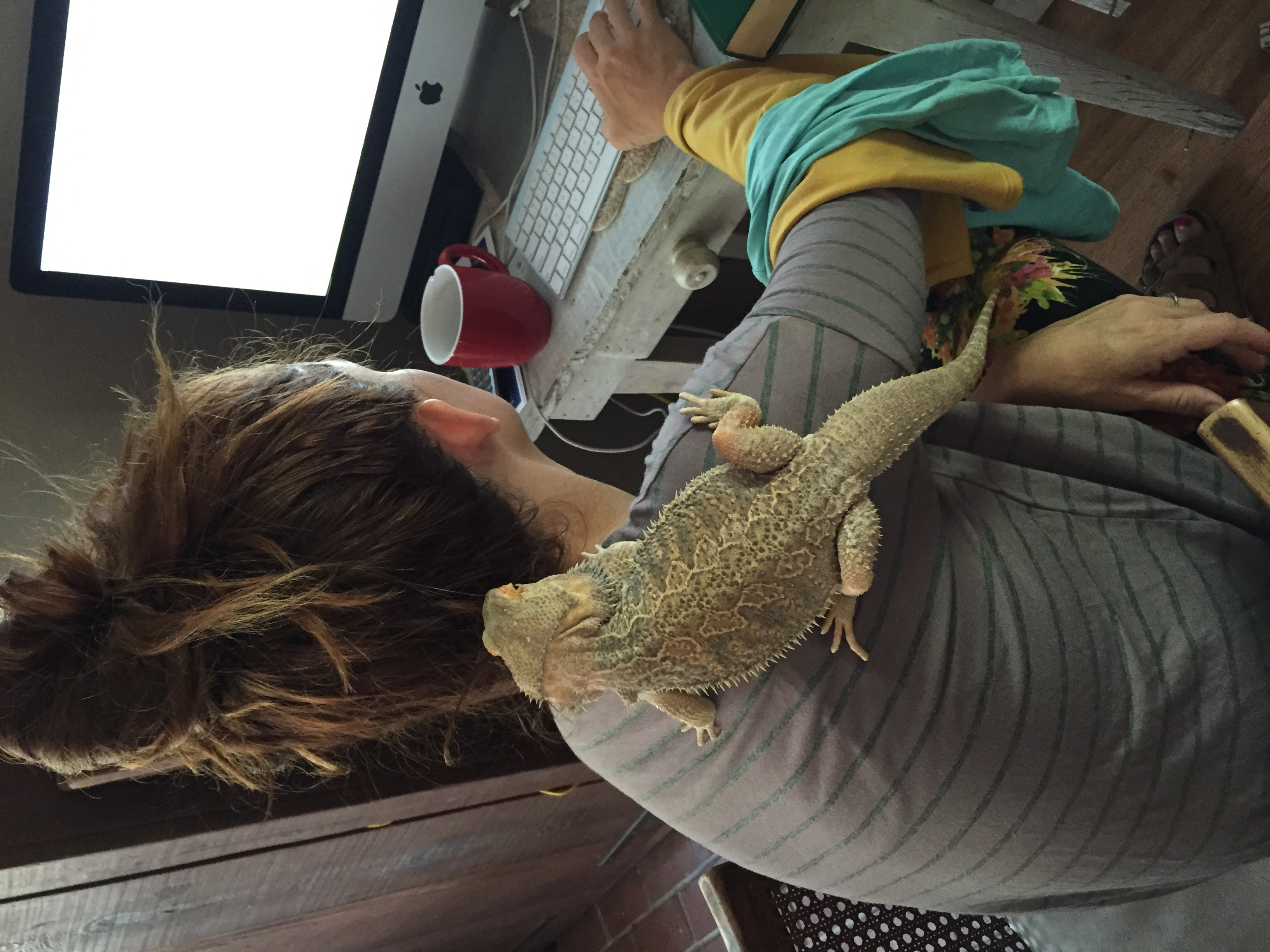 They also have a bearded dragon!