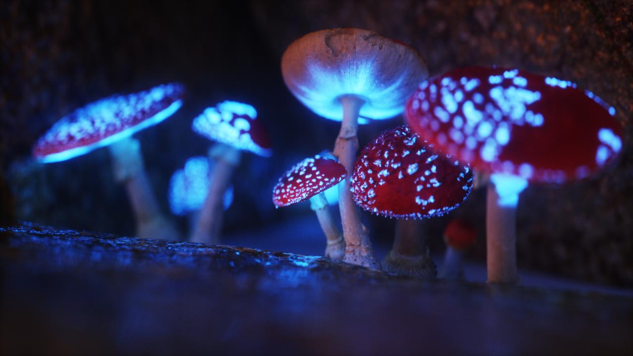 GlowingMushroom_Reel0068.png