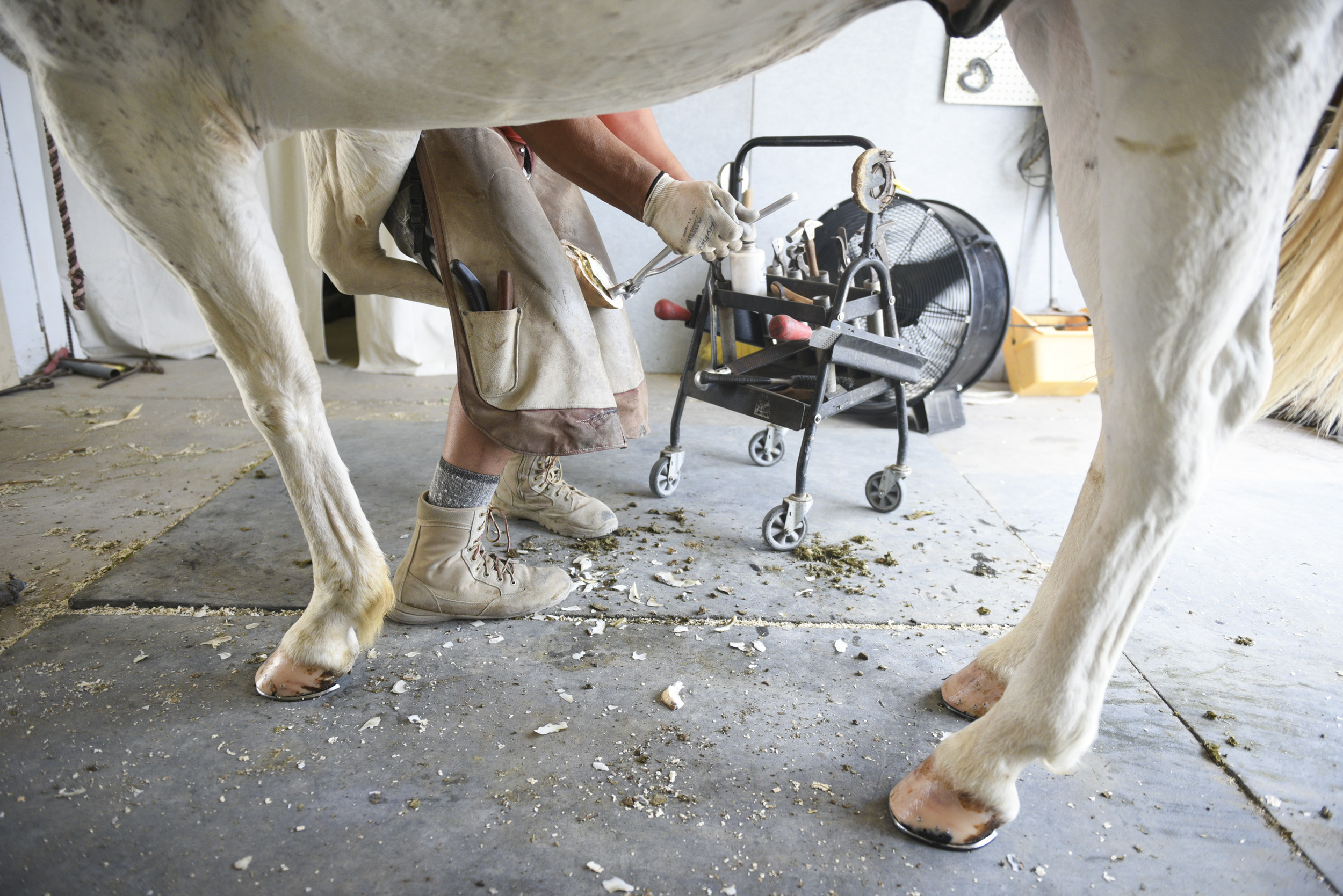 Leon Duran, volunteer at Paradise Ranch since December 2011 maintains Jet's feet in the stable at Paradise Ranch in Las Vegas, Wednesday, June 3, 2015.(Jason Ogulnik/Las Vegas Review-Journal)