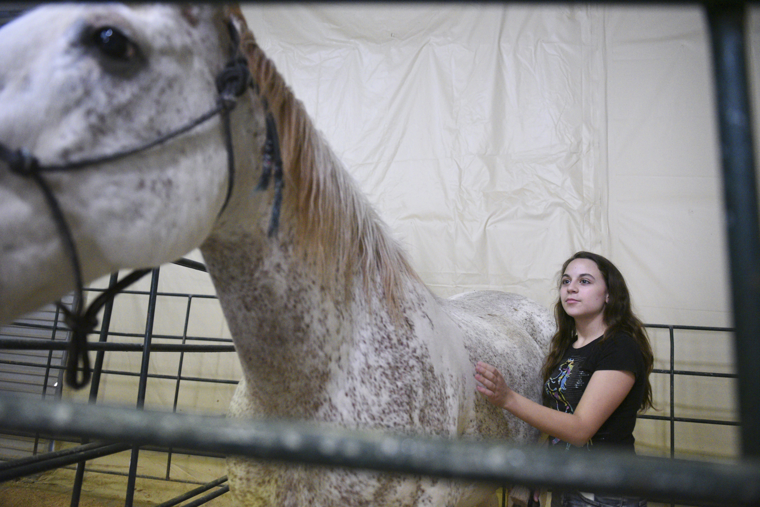 Horse Assisted Therapy (HAT) participant Alyssa Budd, 12, brushes horse, Jet, before taking Jet for a ride at Paradise Ranch in Las Vegas, Wednesday, June 3, 2015.(Jason Ogulnik/Las Vegas Review-Journal)
