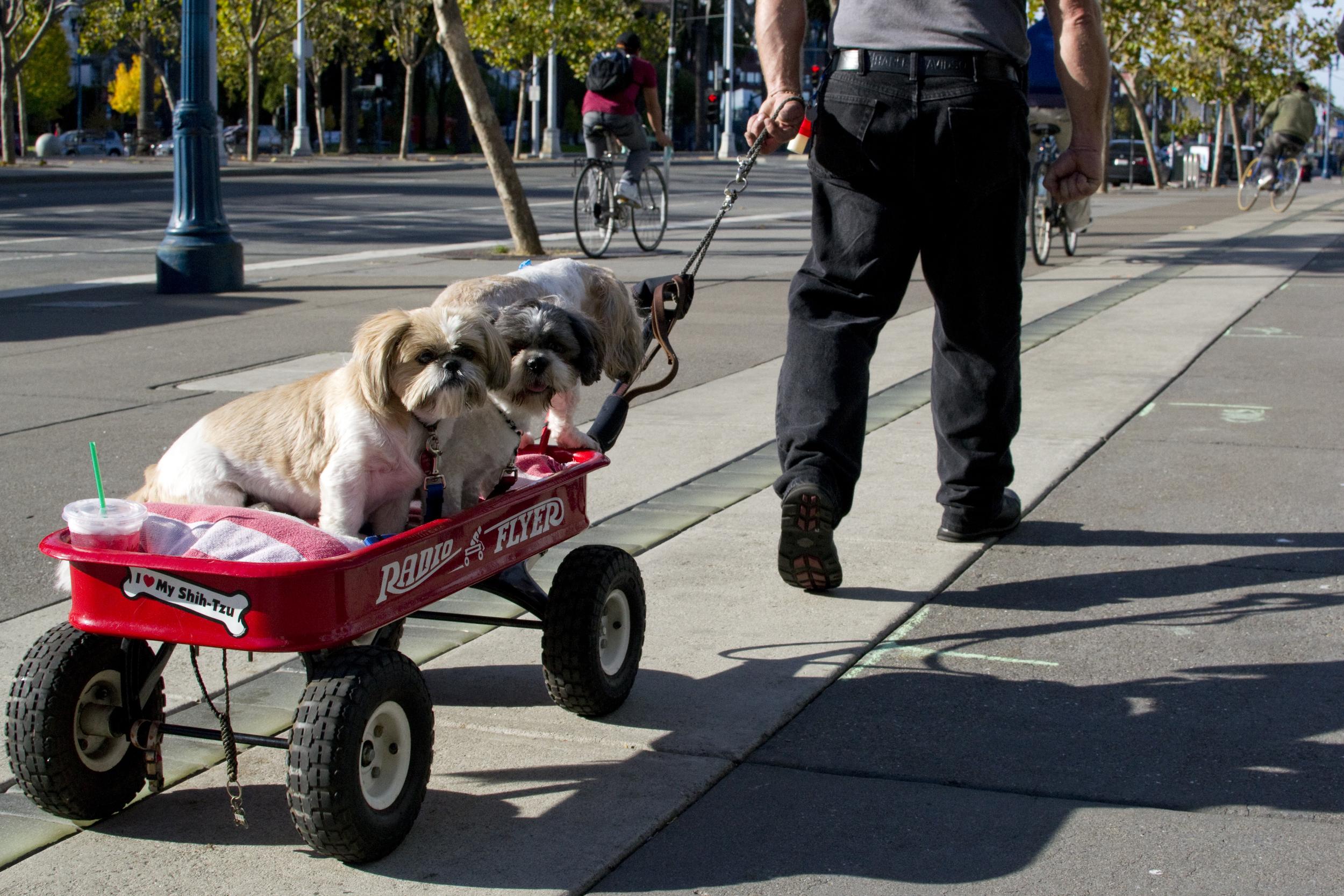 A man pulls three shih tzus in a wagon along the Embarcadero in San Francisco, Calif.Wednesday, Nov. 21, 2012.