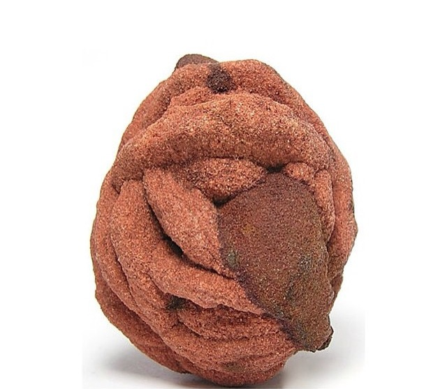 It's a Barite rose, darlings!