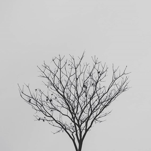 #minimal #cerrado #minimalism