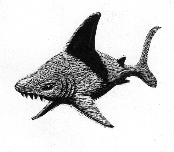 shark_scratchboard.jpg