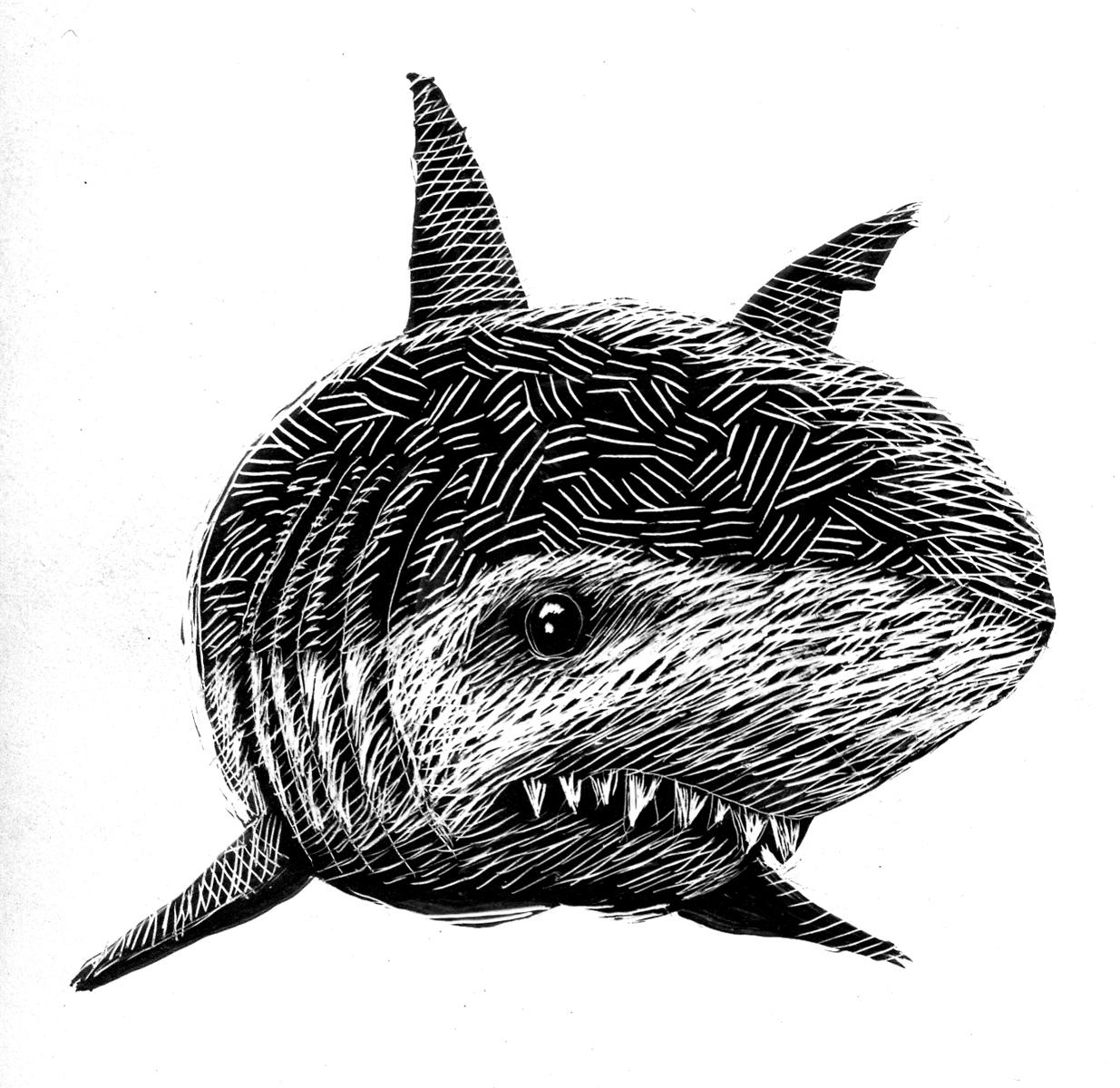 scratchboard_shark02.jpg