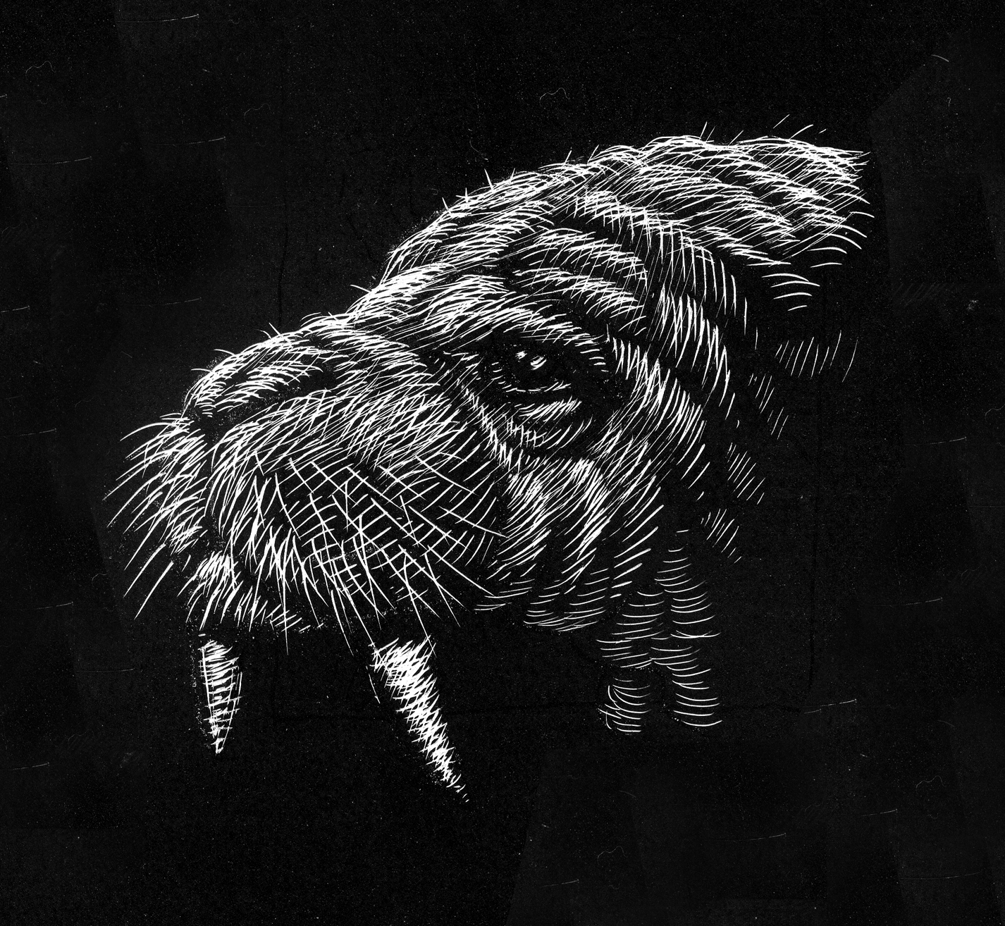 scratchboard_walrus_face20150403.jpg