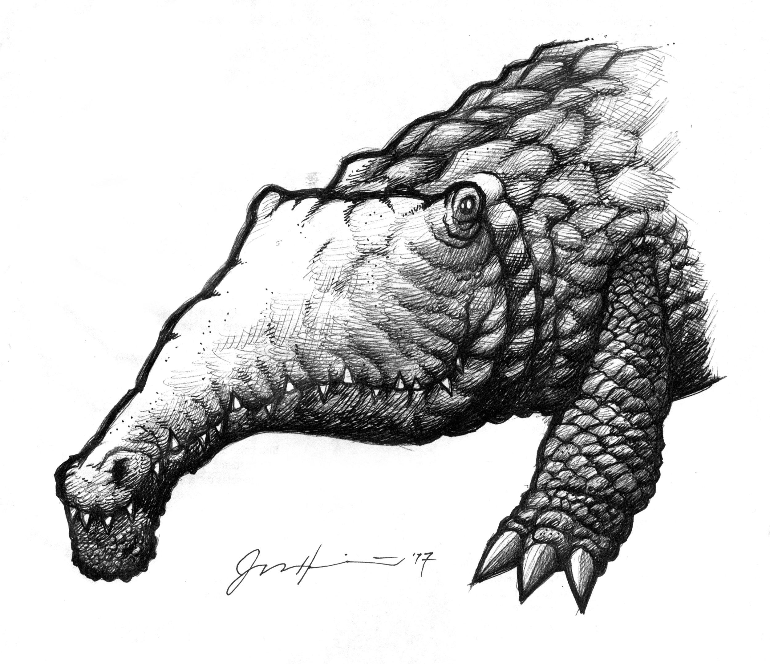 croc01.jpg