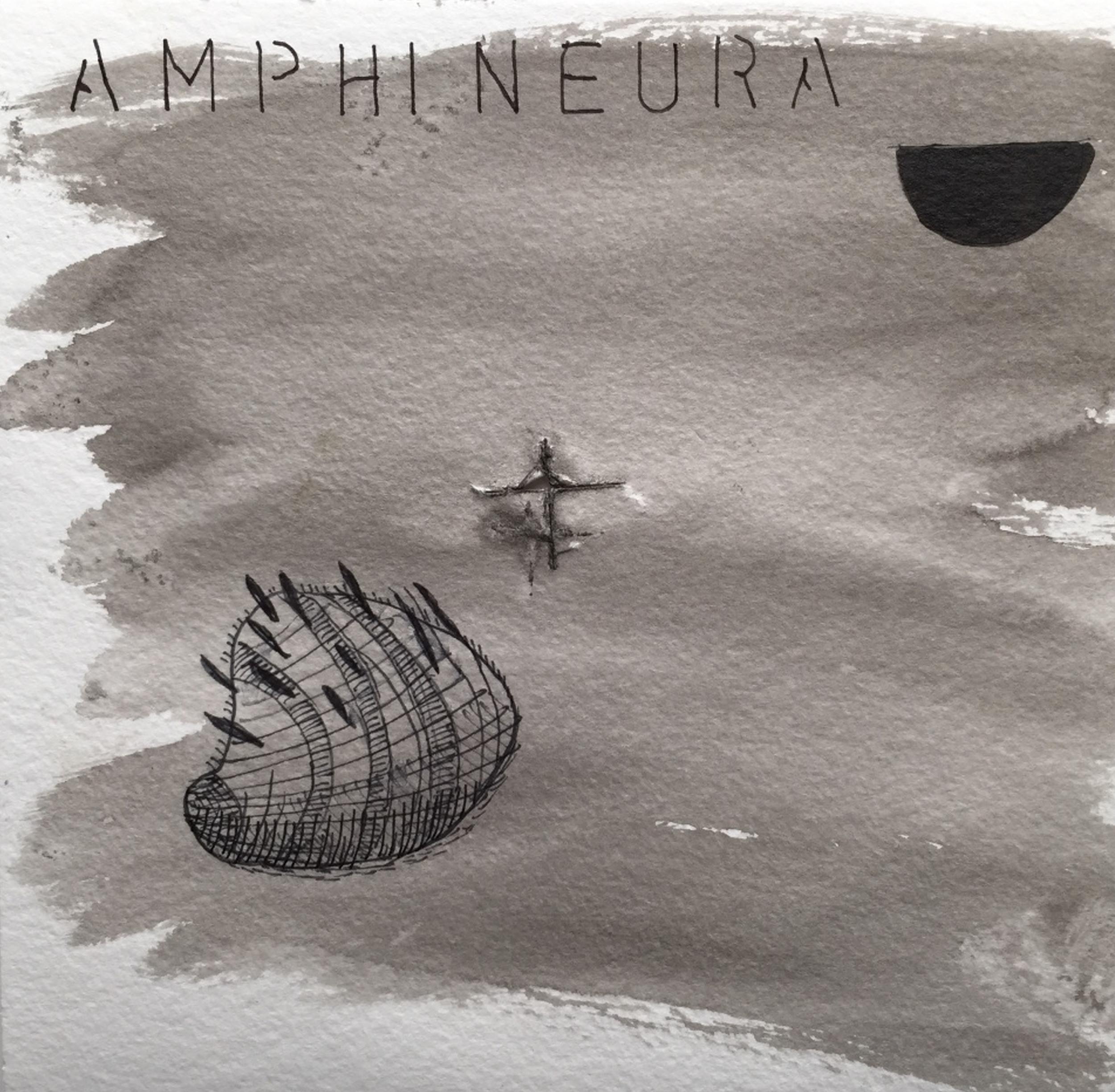 Amphineura 1.jpg