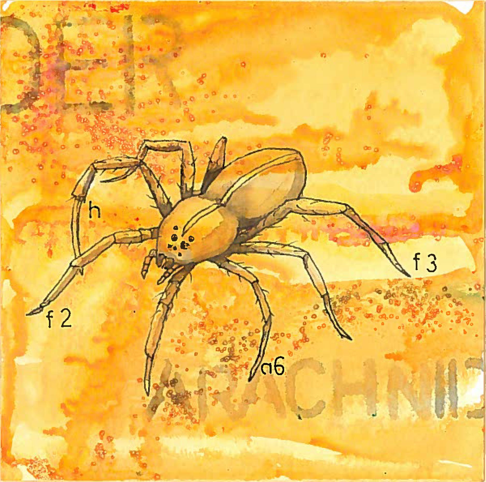 2_spider1.jpeg
