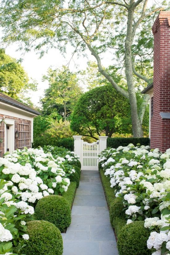 Beautiful greenery carving a pathway to this charming gate. I love the idea of using hedges or shrubbery to create a natural fence to this side yard.