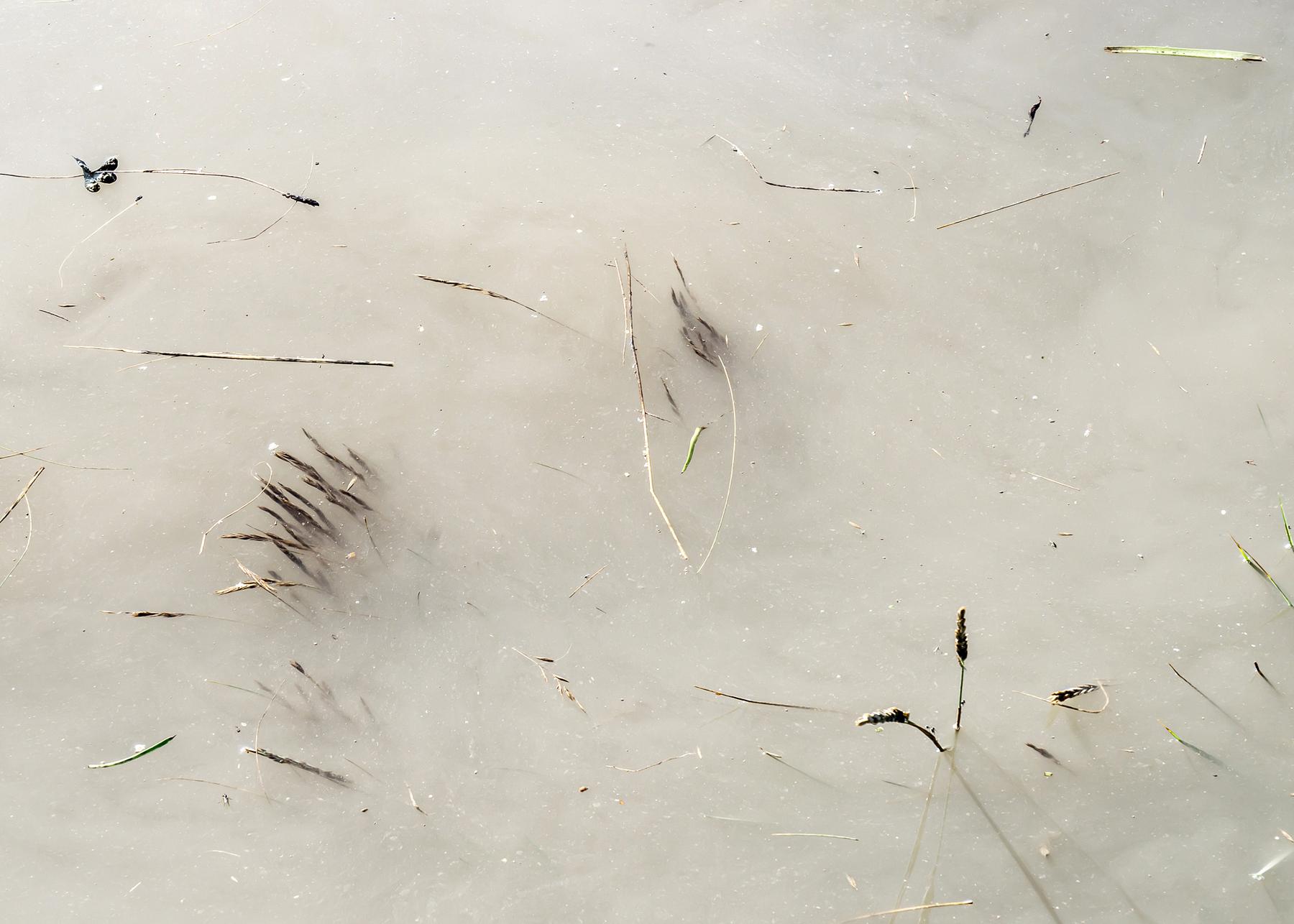 Steart Marshes, Summer