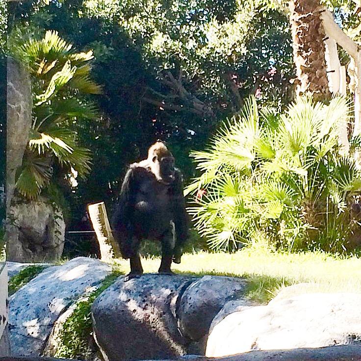 zoo1.jpeg