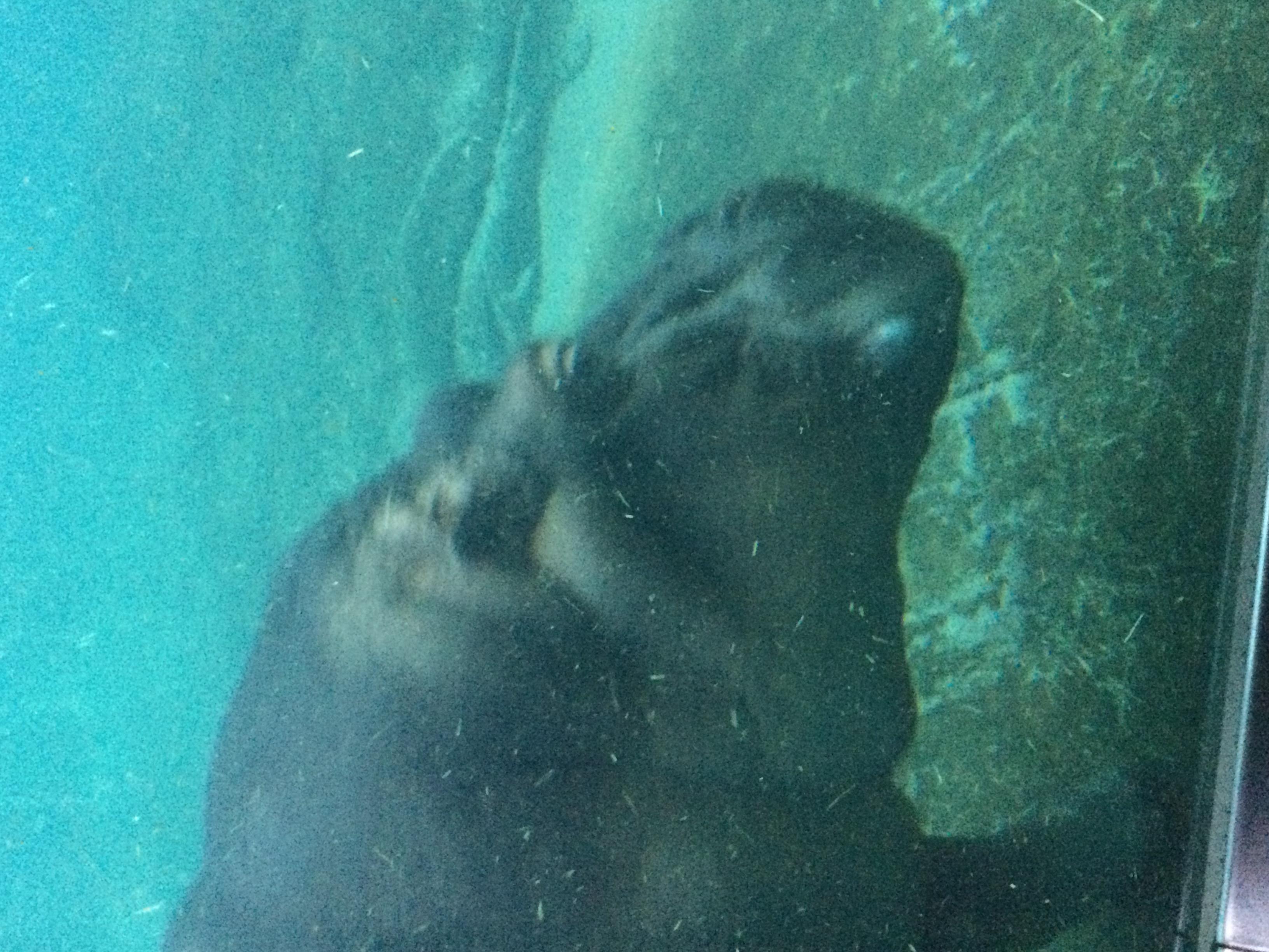 zoo4.jpeg