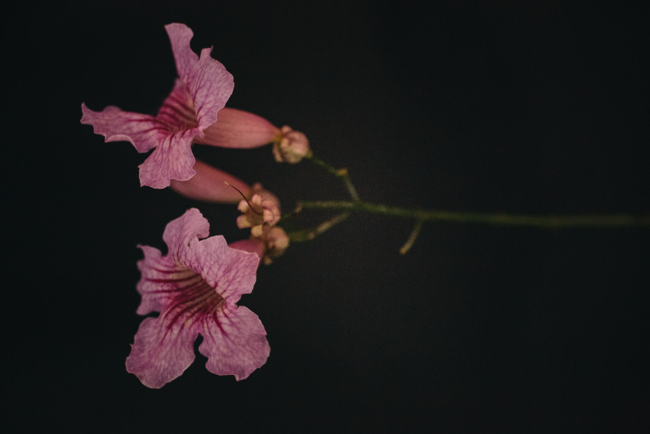 hellosolphoto-fotografia-bodas-flores-10