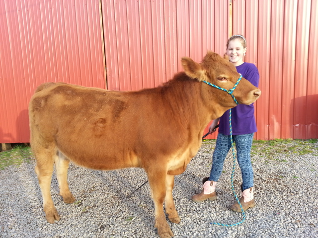 Anna Waters of Blount County with her cow Lucille. Anna is one of the participating future farmers in the featured cattle show and livestock program of this installment of The Tennessee Farm Table.