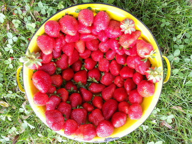 Strawberries grown by Mitchell Hyde.