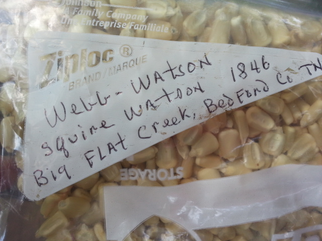 Pictured is a pack of Webb Watson Heirloom Corn Seed Given to Amy by John Coykendall. John writes a little story of origin on the bags he freely shares.