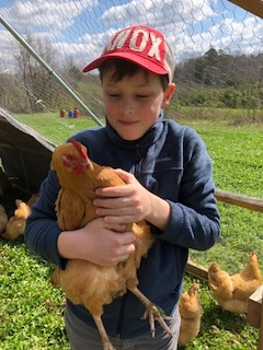 Marshall Bales with one of his chickens. He is over the chicken operation at Bales Farms and is very active, and successful in 4-H programming.   Photo: Amy Campbell.